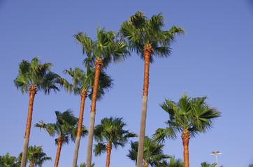 Palmen 2