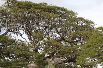 Flughunde an einem Baum