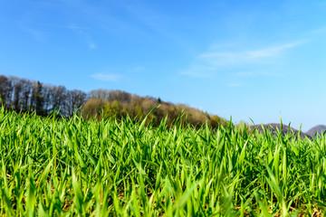 Idyllisch grüne Wiese mit blauem Himmel