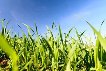 Grünes Gras mit blauem Himmel mit textfreiraum