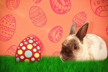 Composite image of portrait of brown rabbit sitting