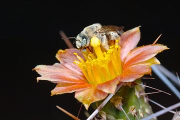 Cactus Bee Evening Dinner