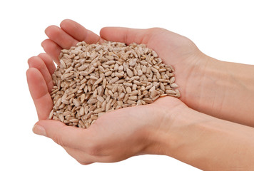 sunflower seeds are in female hands, handful of peeled sunflower seed