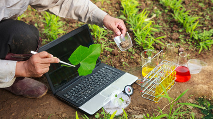 Farmer researching growth of plant in greenhouse. Agriculture concept.