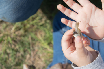 close up little girl's hands touching and playing with little snail