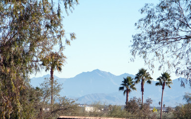 Arizona tropical desert setup with a view on White tanls mountains near Litchfiled Park, west side of Phoenix, AZ