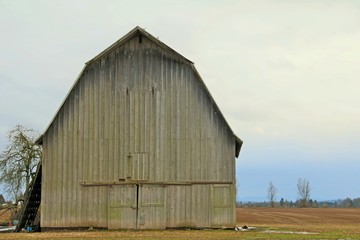 Old Grey and Mossy Wooden Barn in the Country, Pale Blue Overcast Sky, Daytime  - Full front, left screen composition -  Use barn area for copy overlay with or without text box (HDR Image)