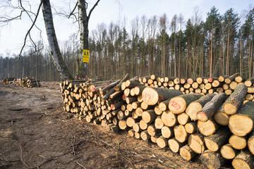 Fototapeta Skład drewna obraz