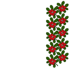 cranberry (cowberry) branches frame, border, isolated on white background, with place for text.