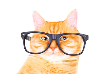 Red cat with glasses isolated on white background.