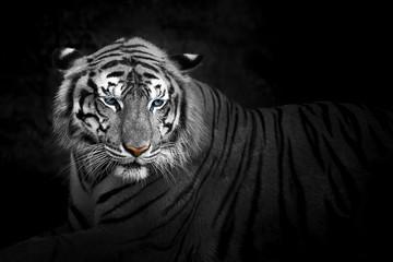 Tigers.