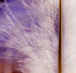 Feather birds close-up. Macro photography.