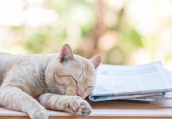 Cat sleep with newspaper.