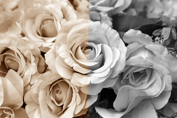 Black and white and Vintage roses flowers