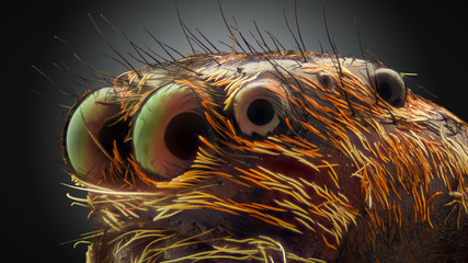 Extreme magnification - Jumping spider portrait, side view