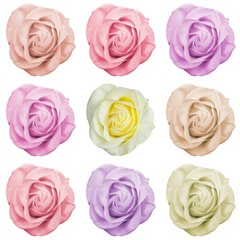 set of roses in different colors
