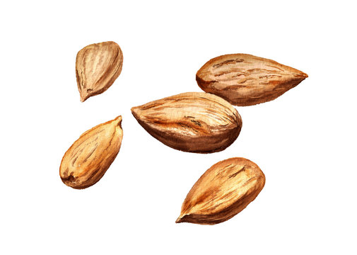 Several dried almonds