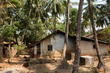 Country houses in the shade of coconut trees. A typical village in southern India