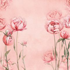 watercolor pink, rose, and red peonies on rose background for greetings card