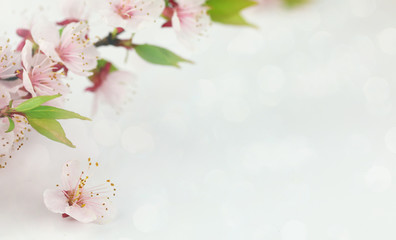 Background with spring blossom flowers.