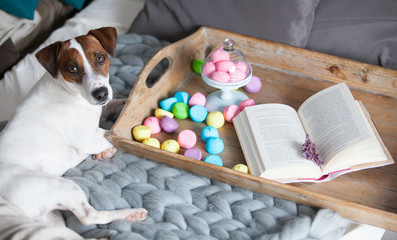 photo of stand with marshmallows, branch of lavender, dog and book on the board on the bed