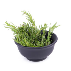 rosemary Herbs and Medicinal herbs. Organic healing herbs. fresh rosemary bunch rosemary isolated on white background