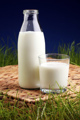 fresh milk in glass jug and glass on fresh green grass