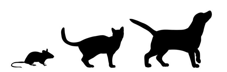 silhouette dog cats and mice