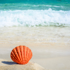 Orange seashell on sandy tropical beach. Summer concept.