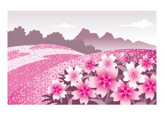 芝桜風景、花畑