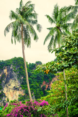 Tropical landscape with large rocks, coconut palm trees, vegetation and sky in bright green colors. Photo from Poda Island, Krabi province, Southern Thailand.
