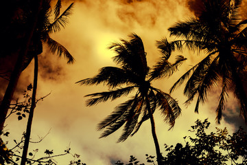 Silhouette coconut palm trees with sun light on dramatic sunset sky background. Travel concept. Photo from Kabi, Thailand. Vintage colors and boost up color processing.