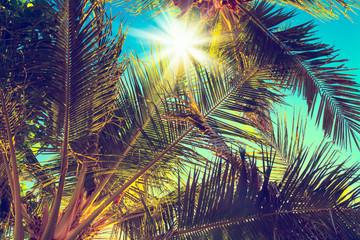 Vintage coconut palm tree on sky background - Vintage Filter
