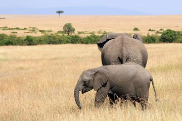 Elephant Baby with Mother on the Savannah. Maasai Mara, Kenya