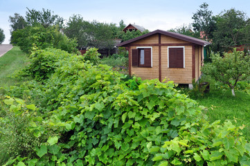 Residential private wooden small house. A hedge of green grapes in the foreground.