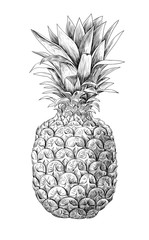 Pineapple fruit on white background. Element for design.