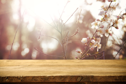 wooden table in front of spring white cherry blossoms tree