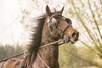 Portret stijgerend paard