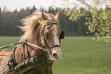 Poster Horses Mooi portret van een lichtbruin paard