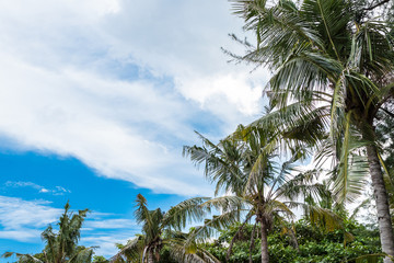 Beautiful palm trees on the beautiful landscape background and blue sky. Tropical beach palm trees relaxation zen inspirational nature background concept. Bali island.