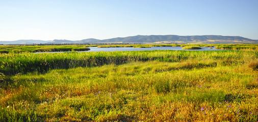 Primavera en el Parque Nacional Tablas de Daimiel, Castilla la Mancha, España