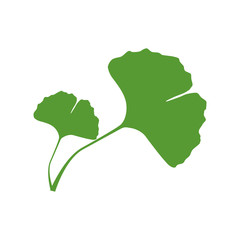 Isolated one color green silhouette of two leaves of ginkgo biloba on white background.