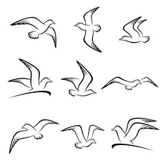 Seagull set. Vector