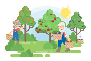Couple in garden. Senior farmers grow the trees with fruits.