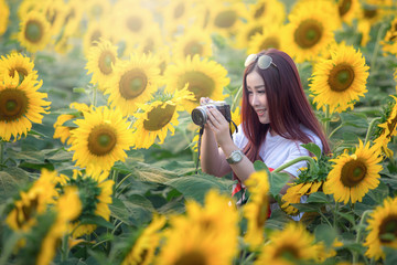 Asian woman are taking photos in the sunflower field fun.