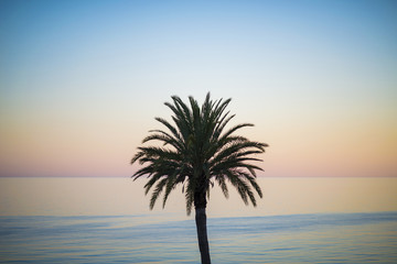 One palm tree silhouette on sunset tropical beach