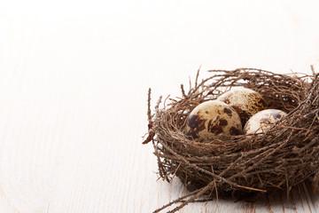 Quail eggs in a nest.