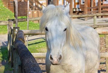 White Horse inside the Corral