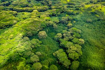 Aerial view of lush green forest foliage, Kauai, Hawaii Wall mural