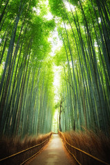 Acrylic Prints Bamboo Pathway through the bamboo grove Kyoto